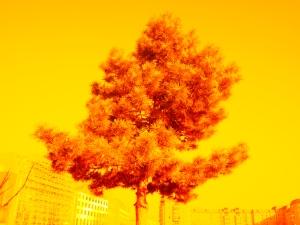 Peter Kagerer, Fotografie, photography, road art berlin, workshop, fotoprojekt,